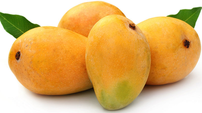 Travel Trail of King of Fruits, Mango and Its 10 Famous Varieties