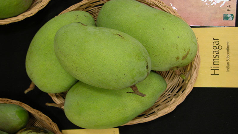 Travel Trail of King of Fruits, Mango and Its 10 Famous